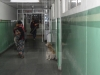 dog-hospital-knh-shimla