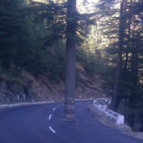 DLF_project_shimla-3