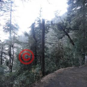 summer-hill-shiv-mandir-road1