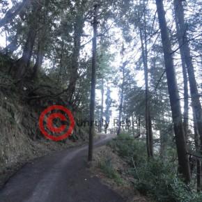 summer-hill-shiv-mandir-road2