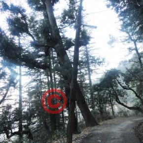 summer-hill-shiv-mandir-road3