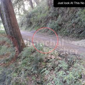 MC_Shimla_summerhill