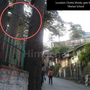 Tibetan-School-in-Shimla