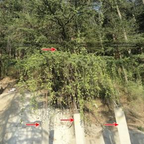 axed-dozens-of-trees