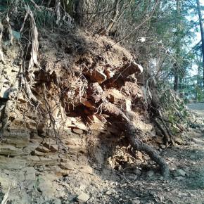 damage-to-trees