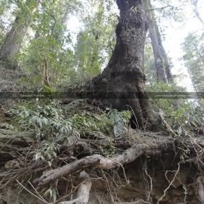 green-belt-shimla