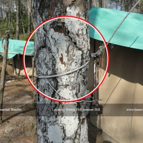 hpseb-killing-trees