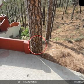 inside-sankat-mochan-mandir-trees