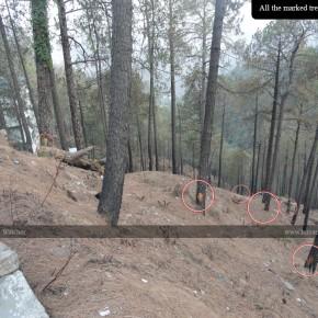 bjp-save-trees