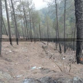 save-trees