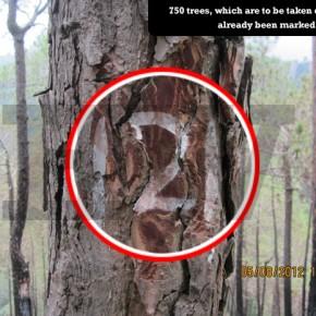 bjp-save-trees-shimla
