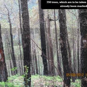 dhumal-save-trees