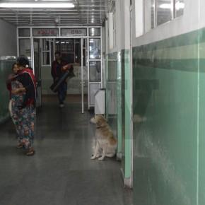 dog-hospital-knh-shimla