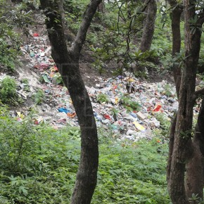garbage-in-forest