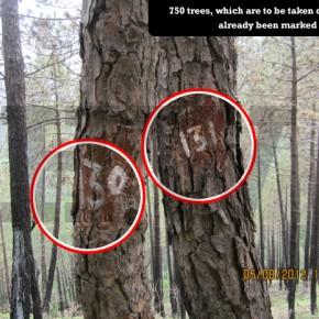 save-trees-bjp