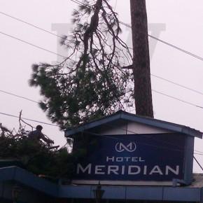 save-trees-hotel-meridian
