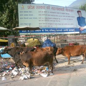 Dhalpur-Chowk-Kullu