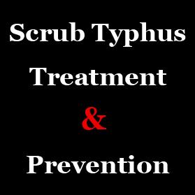 scrub-typhus-himachal