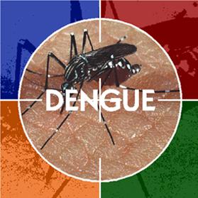 dengue-himachal