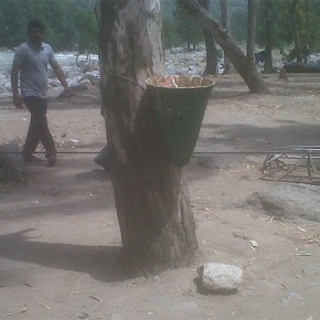 trees-used-for-dustbin-stand