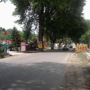 trees-used-for-hoardings-kullu