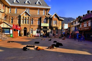Mall-Road-Shimla