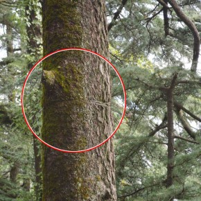 harming-trees-in-shimla