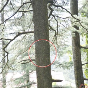 trees-being-killed-in-shimla
