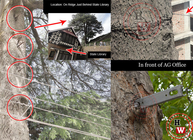 save-trees-shimla