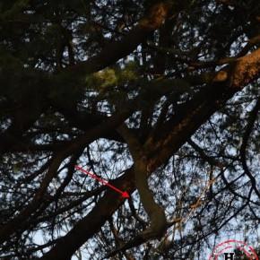 dry-branch