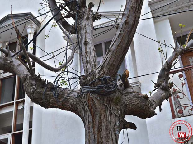 cable wires on shimla's trees