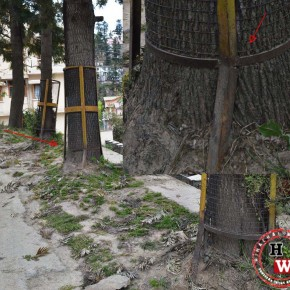 deforestation in new shimla