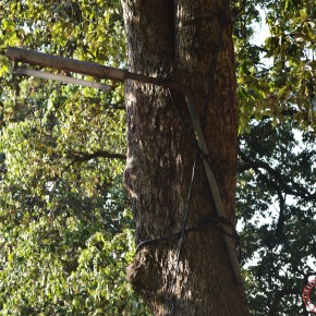 ecological damange in shimla