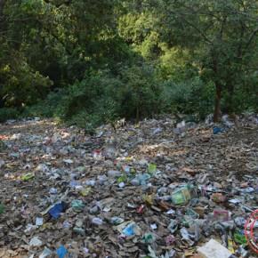 summerhill jungle garbage