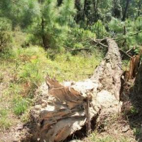 himachal strom destroy crops