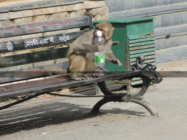 Government committed to effectively deal with monkey menace