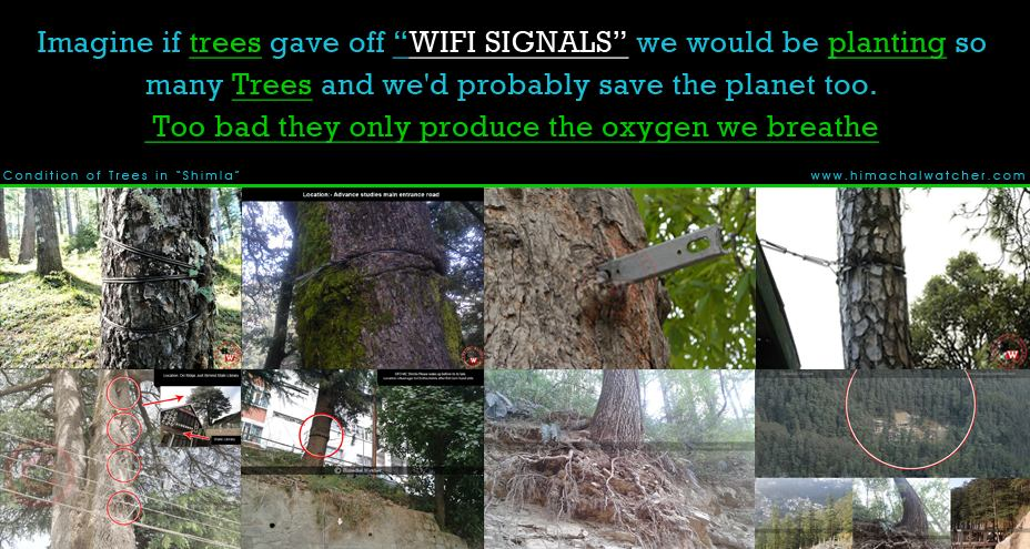 Imagine if trees gave off wifi signals we would be planting so many trees and we'd probably save the planet too too bad they only produce the oxygen we breathe