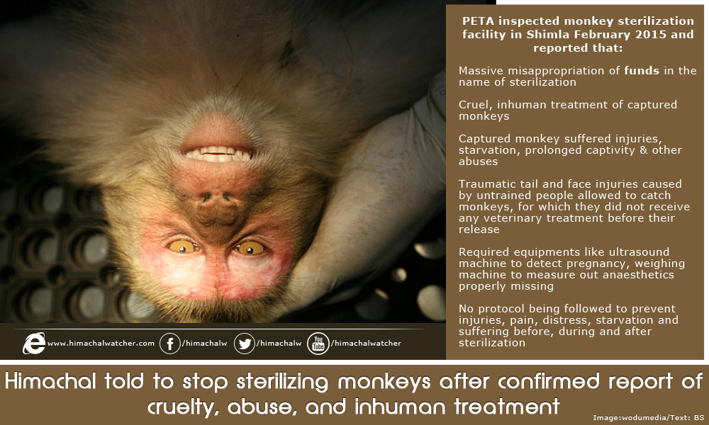 Himachal told to stop sterilizing monkeys after confirmed report of cruelty, abuse, and inhuman treatment