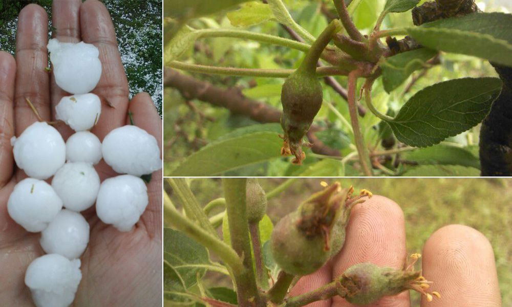 Provide timely and appropriate compensation to distressed Himachal farmers facing massive crop loss: CPI-M
