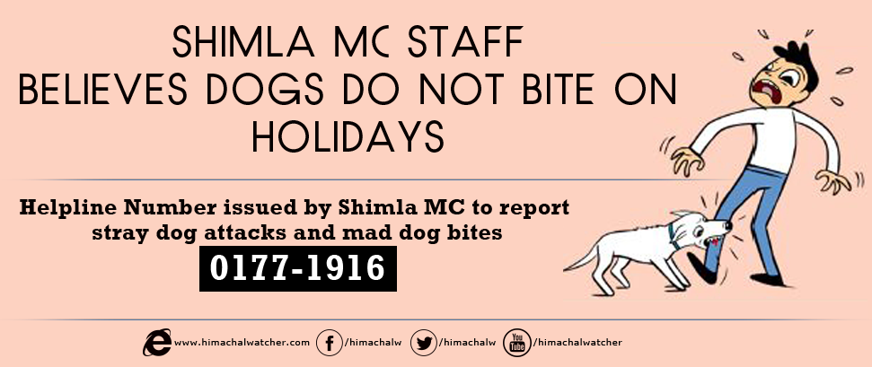 Shimla Mc Staff Believes Dogs Do Not Bite On Holidays