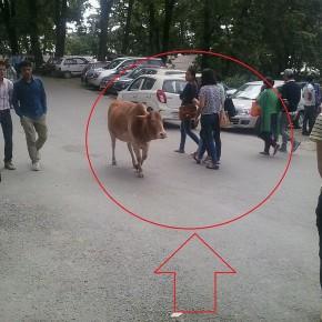 Himachal Pradesh University campus 3