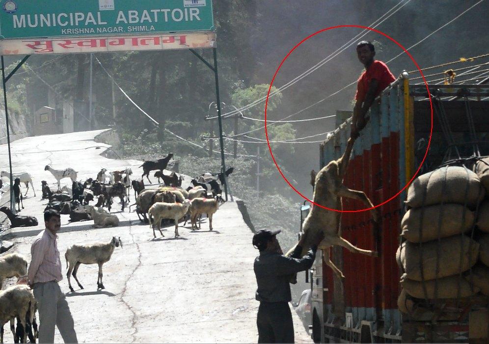Shimla Municipal Abbatoir