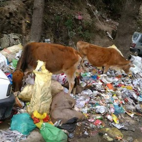 waste-disposal-in-himachal
