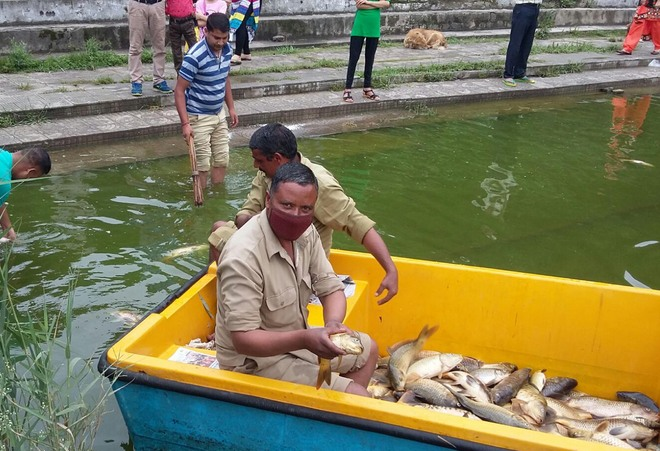 Rewalsar fish death