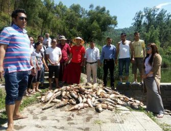 Water-toxicity in Himachal's Rewalsar lake reaches alarming level, mass fish death reported again