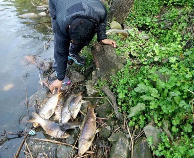 rewalsar lake pollution