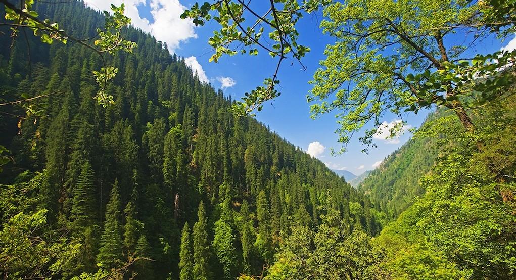 Biodiversity of Himachal Pradesh