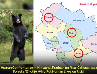 Bear attack in Himachal village leaves 1 mauled to death, 3 seriously injured