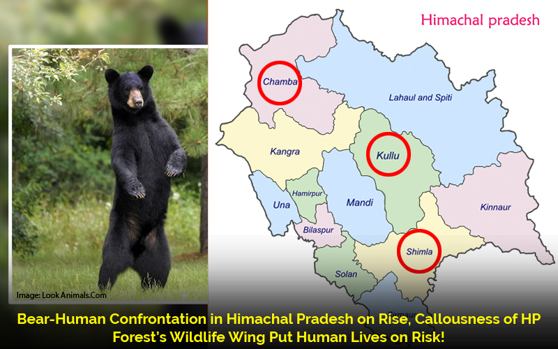 Bear-Human-Confrontation-in-Himachal-Pradesh-on-Rise,-Callousness-of-HP-Forest's-Wildlife-Wing-Put-Lives-on-Risk
