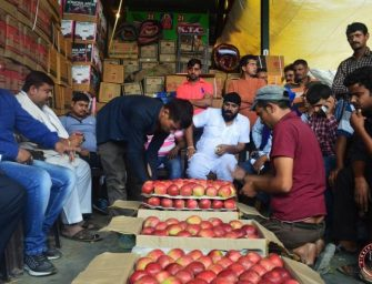 This apple season, Himachal has exported more than 1.95 crore boxes so far